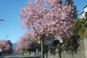 Strasse in Ascona