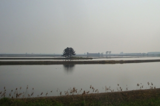 Piemont Reisfeld