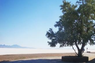 Baum Salz