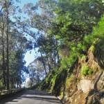 Madeira 396