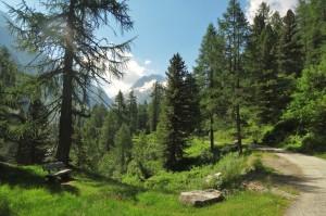 St.Moritz 4 Cavloccio 024