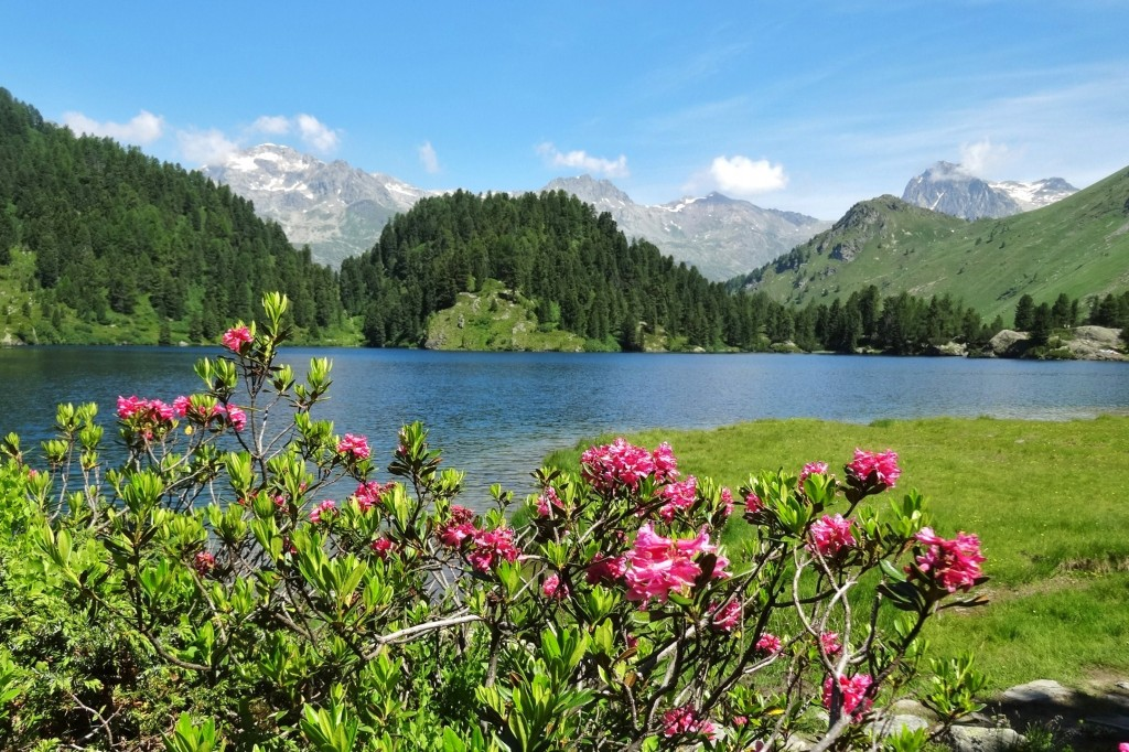 St.Moritz 4 Cavloccio 041