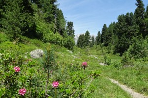 St.Moritz 4 Cavloccio 070