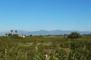Italien 10 bis Oliveri 087