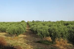 Italien 16 Agrigento 024
