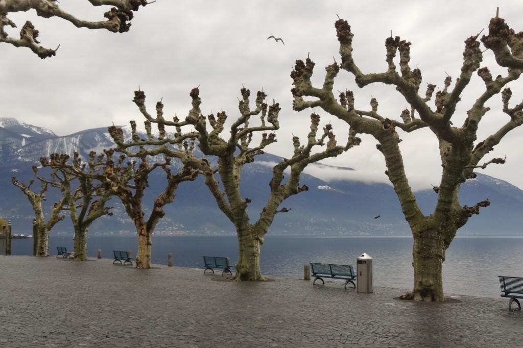 Ascona 061