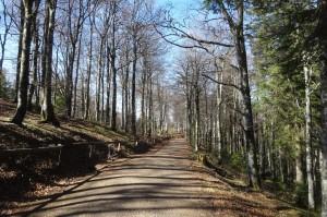 Münstertal Erlebnispark 041