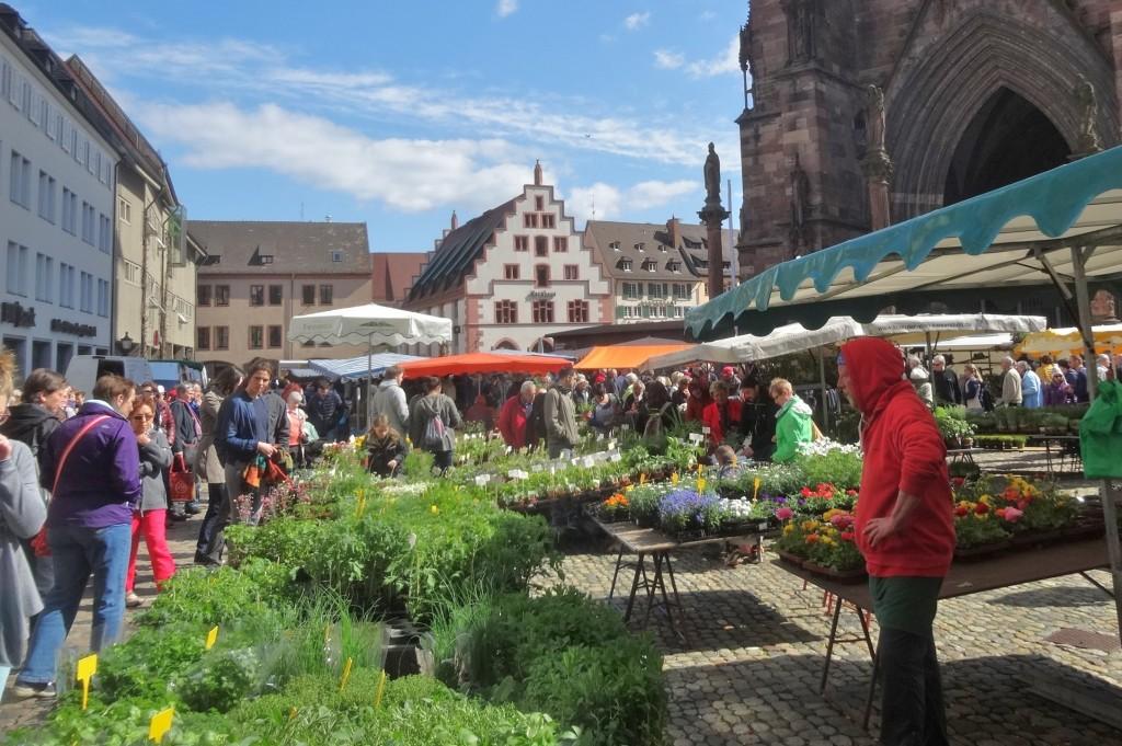 Münstertal - Freiburg 066