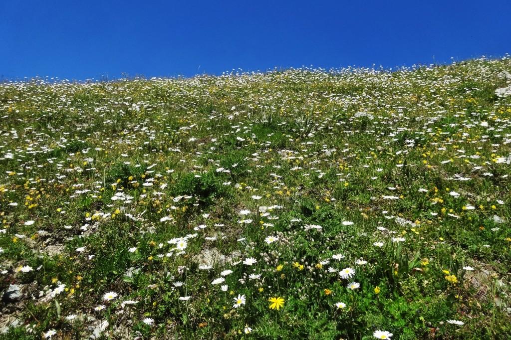 St.Moritz 4 Corviglia 048