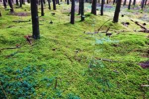 Mittenwald 11 B Barmsee 071
