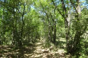3. Sentier d'Ocres 187