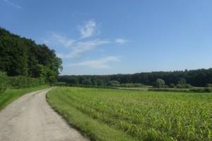 2016-06-24  Markdorf 4 084