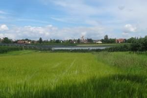 2016-06-27Markdorf 7 026