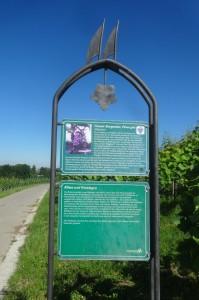 Markdorf 2 Wanderung 061