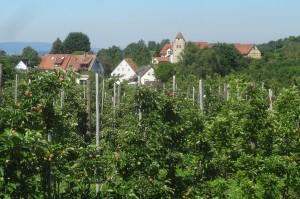 Markdorf 2 Wanderung 127